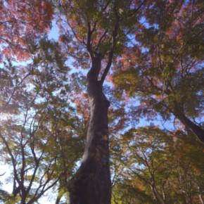 2013_12_trees_1-1